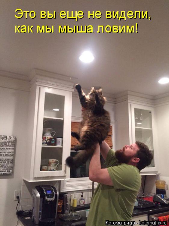 Котоматрица: Это вы еще не видели, как мы мыша ловим!