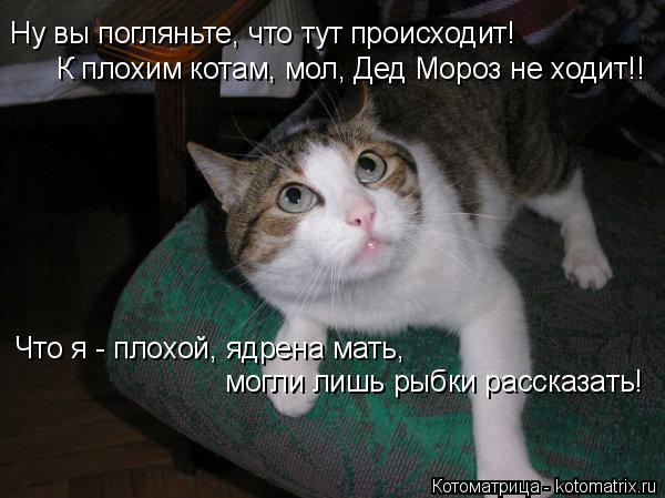 Котоматрица: Ну вы погляньте, что тут происходит! К плохим котам, мол, Дед Мороз не ходит!! Что я - плохой, ядрена мать, могли лишь рыбки рассказать!