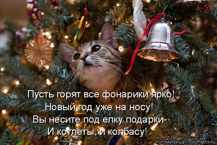 Котоматрица: Пусть горят все фонарики ярко! Новый год уже на носу! Вы несите под елку подарки- И котлеты, и колбасу!