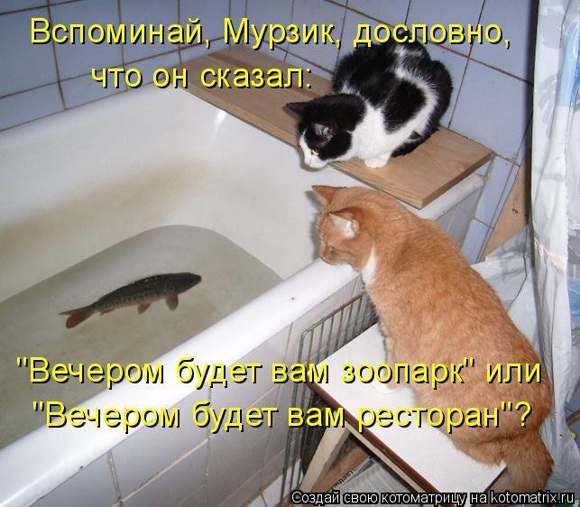 """Котоматрица: Вспоминай, Мурзик, дословно, что он сказал: """"Вечером будет вам зоопарк"""" или """"Вечером будет вам ресторан""""?"""