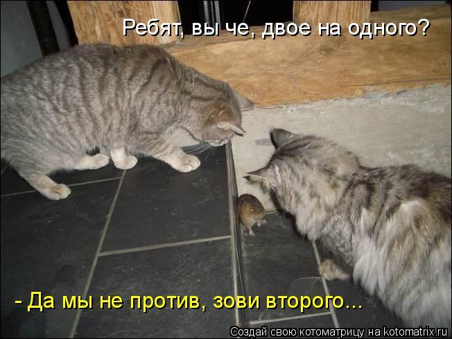 Котоматрица: Ребят, вы че, двое на одного? - Да мы не против, зови второго...