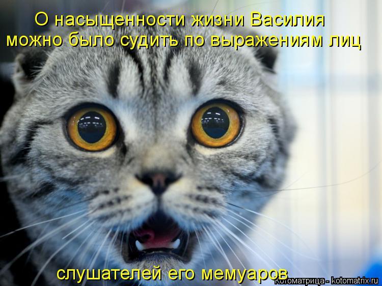 Котоматрица: О насыщенности жизни Василия можно было судить по выражениям лиц слушателей его мемуаров