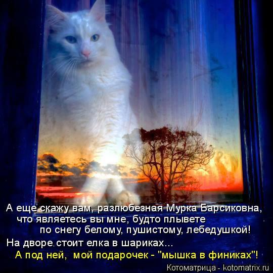 Котоматрица: А еще скажу вам, разлюбезная Мурка Барсиковна,  что являетесь вы мне, будто плывете  по снегу белому, пушистому, лебедушкой! На дворе стоит ел