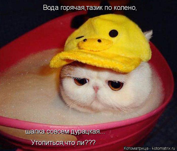 Котоматрица: Вода горячая,тазик по колено, шапка совсем дурацкая... Утопиться,что ли???
