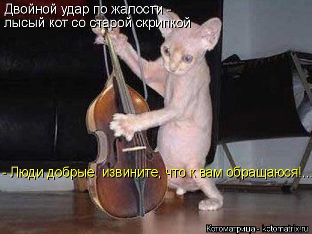 Котоматрица: Двойной удар по жалости - лысый кот со старой скрипкой - Люди добрые, извините, что к вам обращаюся!...