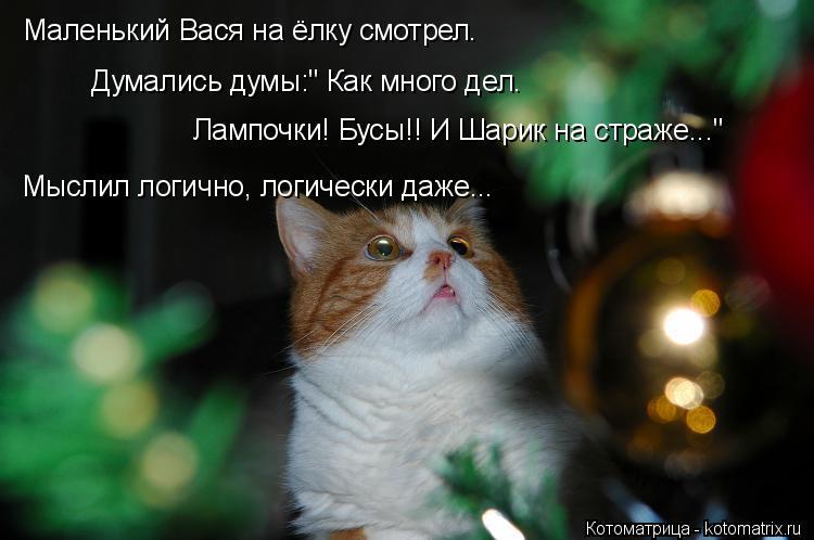 """Котоматрица: Думались думы:"""" Как много дел. Маленький Вася на ёлку смотрел. Лампочки! Бусы!! И Шарик на страже..."""" Мыслил логично, логически даже..."""