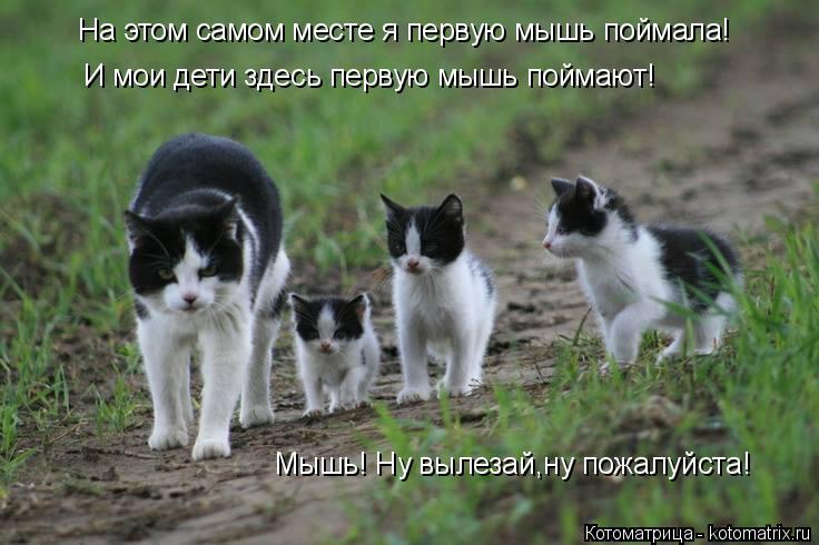 Котоматрица: На этом самом месте я первую мышь поймала! И мои дети здесь первую мышь поймают! Мышь! Ну вылезай,ну пожалуйста!