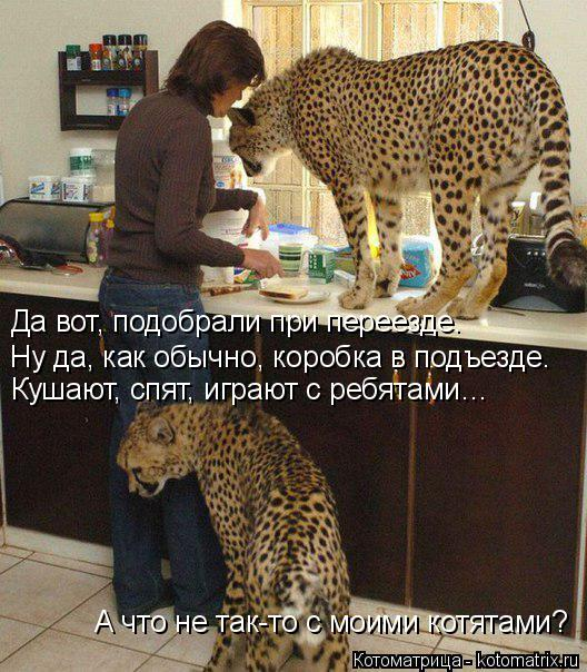 Котоматрица: Да вот, подобрали при переезде. Ну да, как обычно, коробка в подъезде. Кушают, спят, играют с ребятами… А что не так-то с моими котятами?