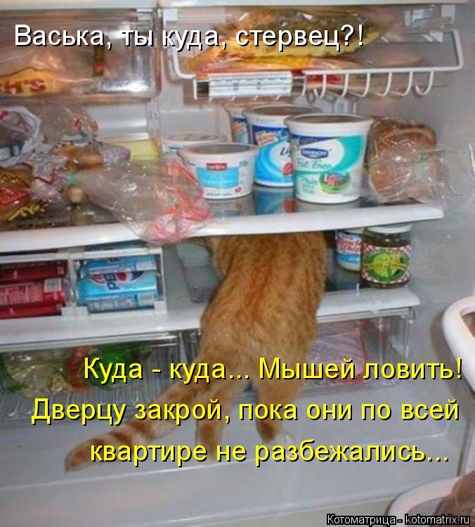 Котоматрица: Васька, ты куда, стервец?! Куда - куда... Мышей ловить! Дверцу закрой, пока они по всей  квартире не разбежались...