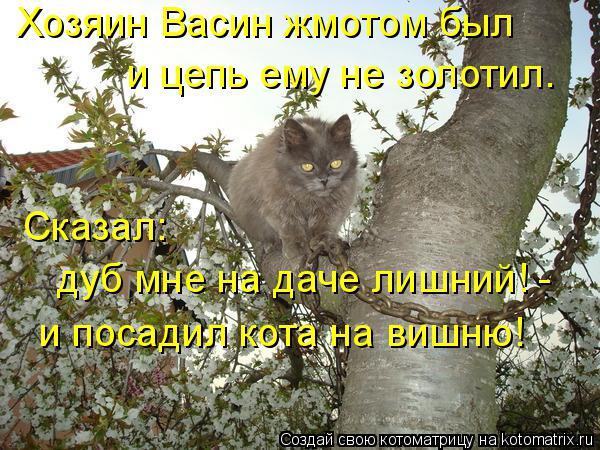 Котоматрица: Хозяин Васин жмотом был и цепь ему не золотил. Сказал:  дуб мне на даче лишний! - и посадил кота на вишню!