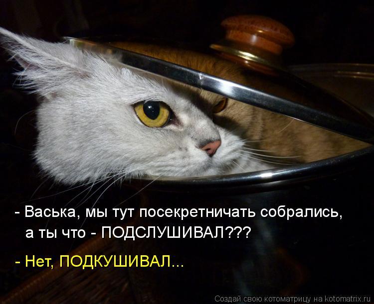 Котоматрица: - Васька, мы тут посекретничать собрались,  а ты что - ПОДСЛУШИВАЛ??? - Нет, ПОДКУШИВАЛ...