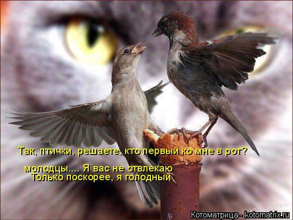 Котоматрица: Так, птички, решаете, кто первый ко мне в рот? молодцы.... Я вас не отвлекаю Только поскорее, я голодный