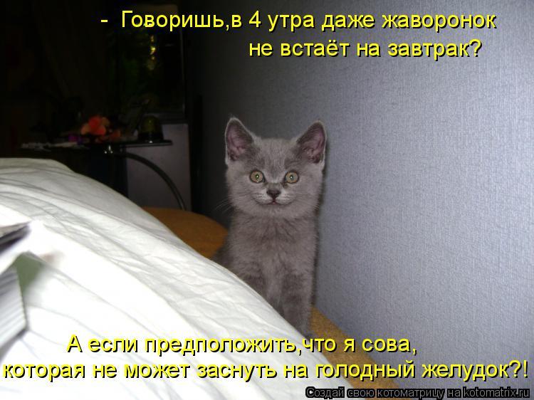 Котоматрица: -  Говоришь,в 4 утра даже жаворонок  не встаёт на завтрак? которая не может заснуть на голодный желудок?! А если предположить,что я сова,