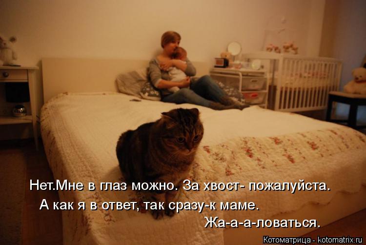 Котоматрица: Нет.Мне в глаз можно. За хвост- пожалуйста. А как я в ответ, так сразу-к маме. Жа-а-а-ловаться.