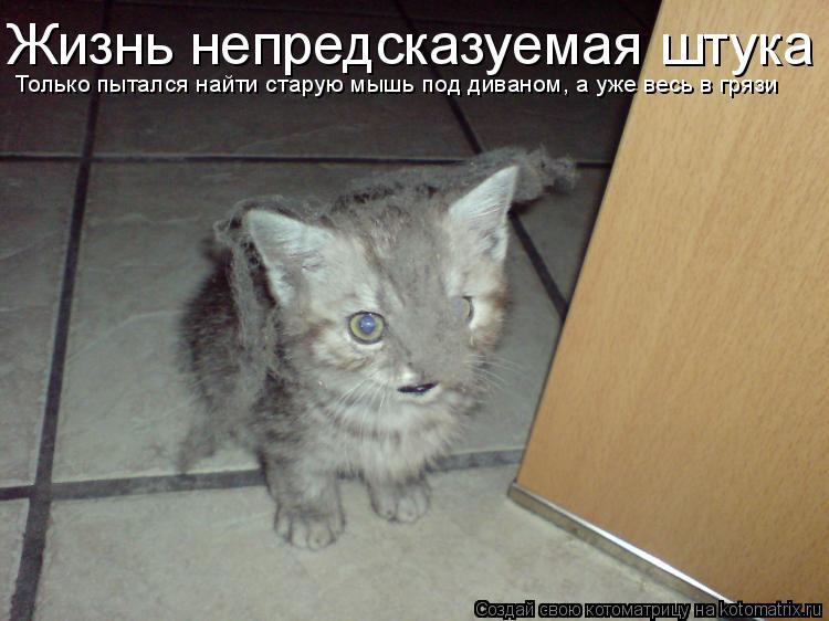 Котоматрица: Жизнь непредсказуемая штука Только пытался найти старую мышь под диваном, а уже весь в грязи