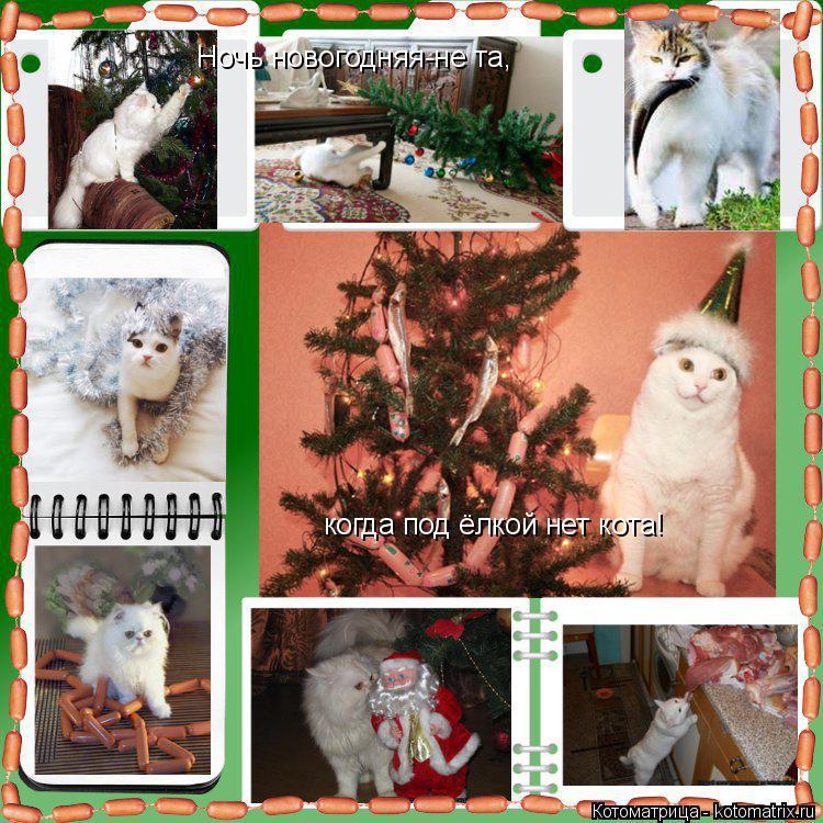 Котоматрица: Ночь новогодняя-не та, когда под ёлкой нет кота!