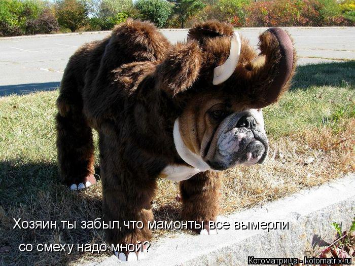 Котоматрица: Хозяин,ты забыл,что мамонты все вымерли со смеху надо мной?