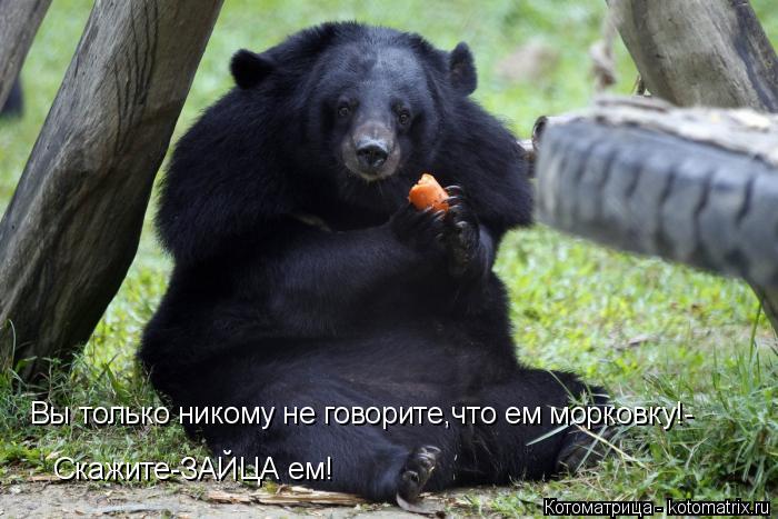 Котоматрица: Вы только никому не говорите,что ем морковку!-  Скажите-ЗАЙЦА ем!