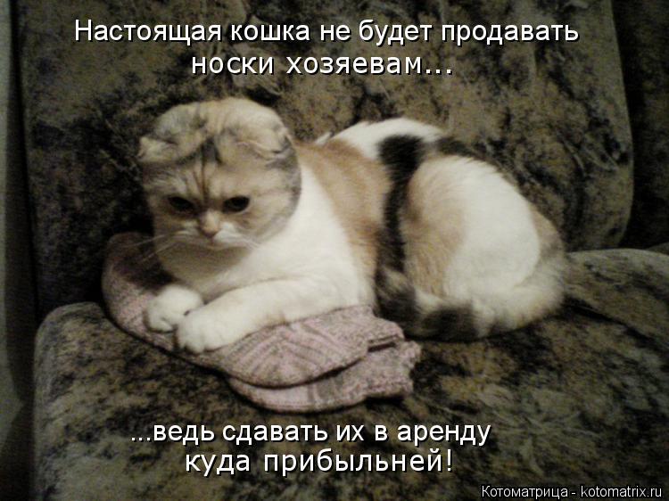 Котоматрица: Настоящая кошка не будет продавать носки хозяевам... ...ведь сдавать их в аренду куда прибыльней!