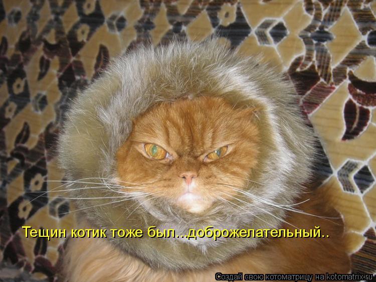 Котоматрица: Тещин котик тоже был...доброжелательный..