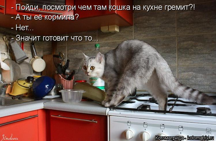 Котоматрица: - А ты её кормила? - Нет... - Пойди, посмотри чем там кошка на кухне гремит?! - Значит готовит что то...
