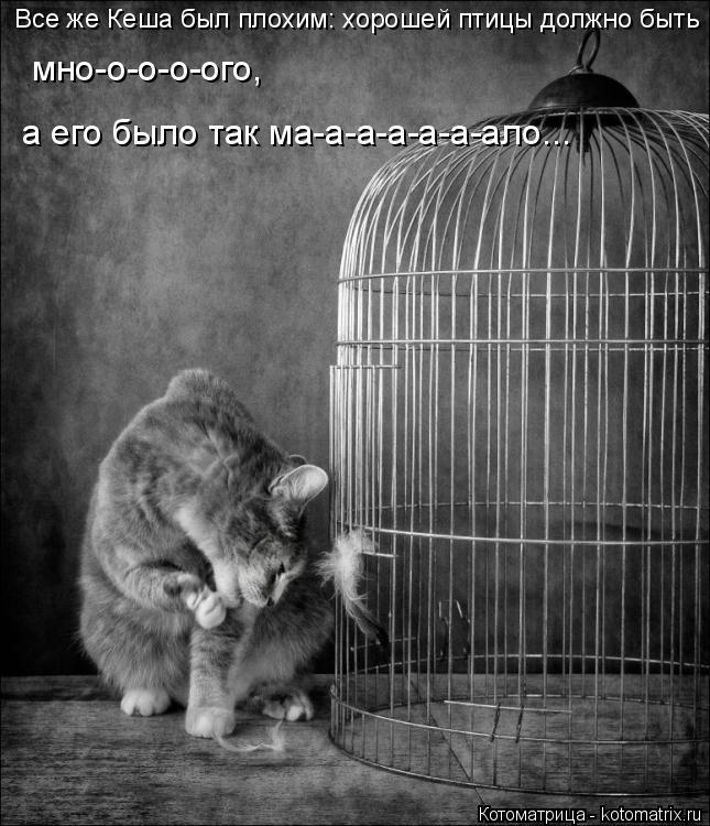 Котоматрица: Все же Кеша был плохим: хорошей птицы должно быть мно-о-о-о-ого,  а его было так ма-а-а-а-а-а-ало...