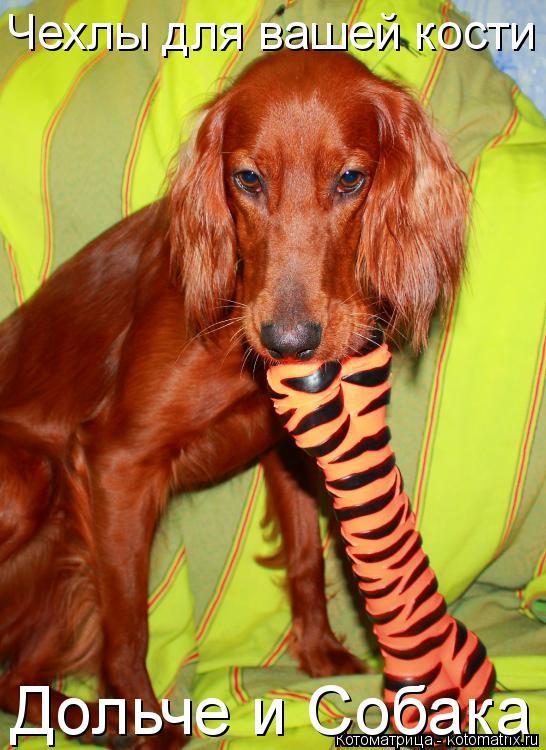 Котоматрица: Чехлы для вашей кости Дольче и Собака