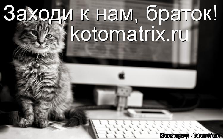 Котоматрица: kotomatrix.ru Заходи к нам, браток!