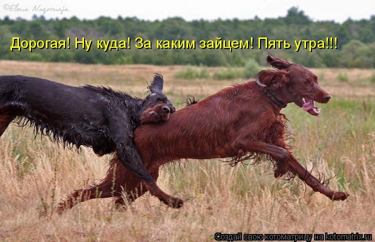 Котоматрица: Дорогая! Ну куда! За каким зайцем! Пять утра!!!