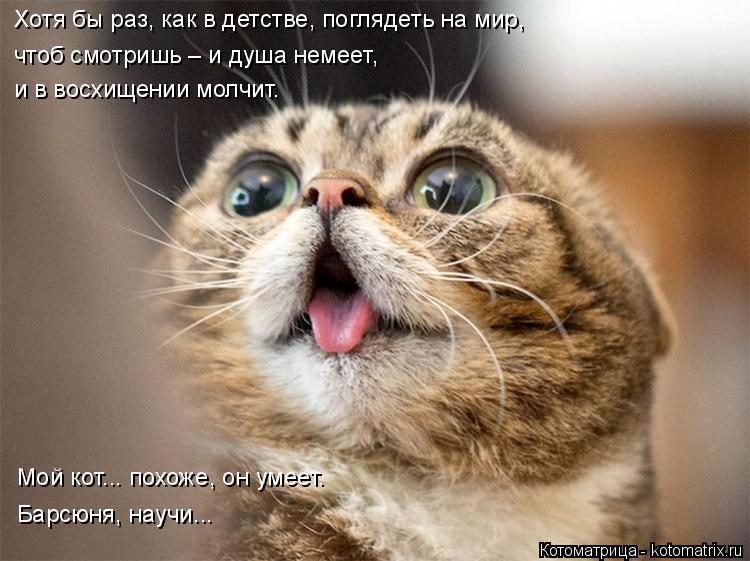 Котоматрица: Хотя бы раз, как в детстве, поглядеть на мир, чтоб смотришь – и душа немеет, и в восхищении молчит. Мой кот... похоже, он умеет. Барсюня, научи...