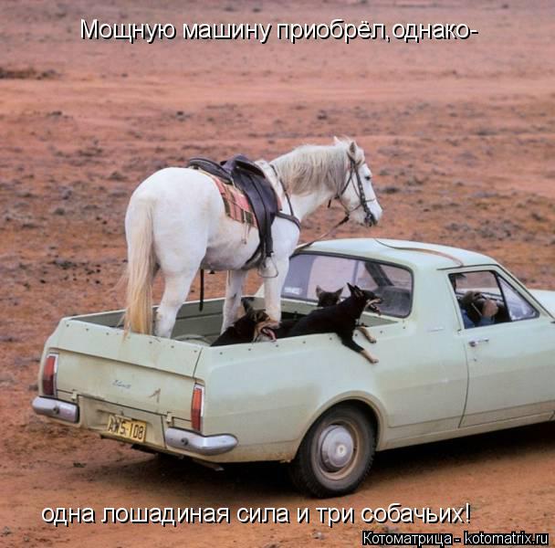 Котоматрица: Мощную машину приобрёл,однако- одна лошадиная сила и три собачьих!