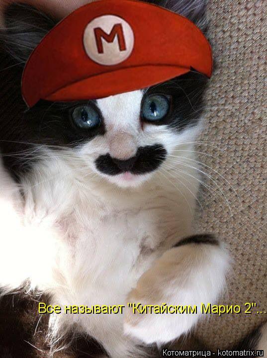 """Котоматрица: Все называют """"Китайским Марио 2""""..."""