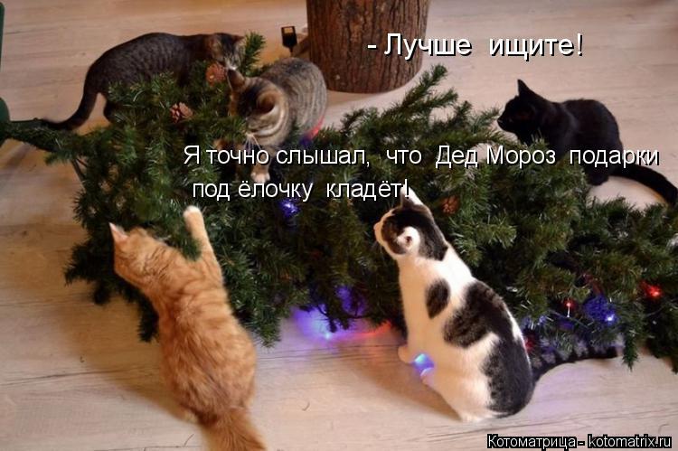 Котоматрица: - Лучше  ищите!  Я точно слышал,  что  Дед Мороз  подарки    под ёлочку  кладёт!