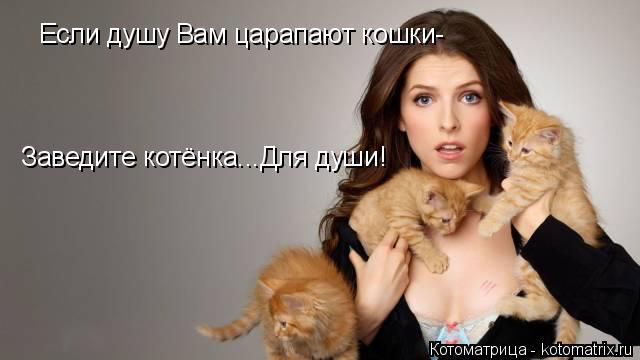Котоматрица: Если душу Вам царапают кошки- Заведите котёнка...Для души!