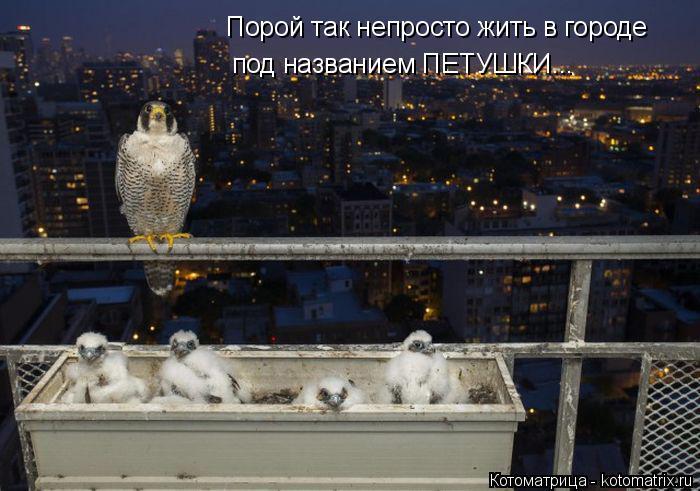 Котоматрица: Порой так непросто жить в городе под названием ПЕТУШКИ...