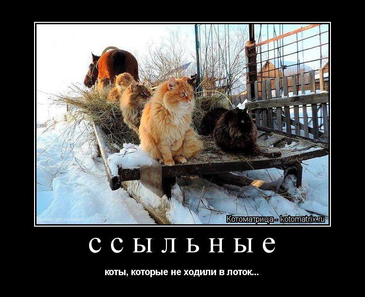 Котоматрица: ссыльные коты, которые не ходили в лоток...