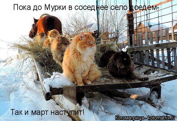 Котоматрица: Пока до Мурки в соседнее село доедем- Так и март наступит!