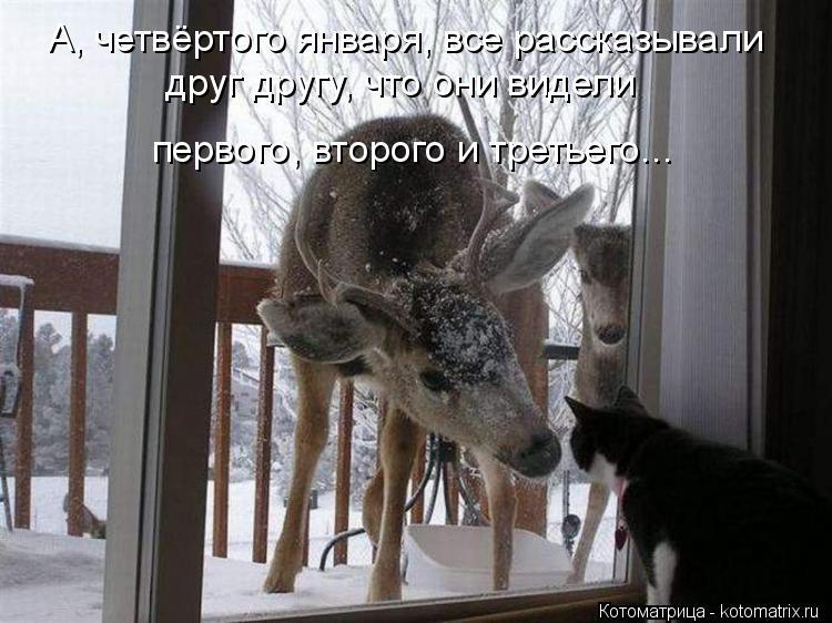 Котоматрица: А, четвёртого января, все рассказывали друг другу, что они видели первого, второго и третьего...