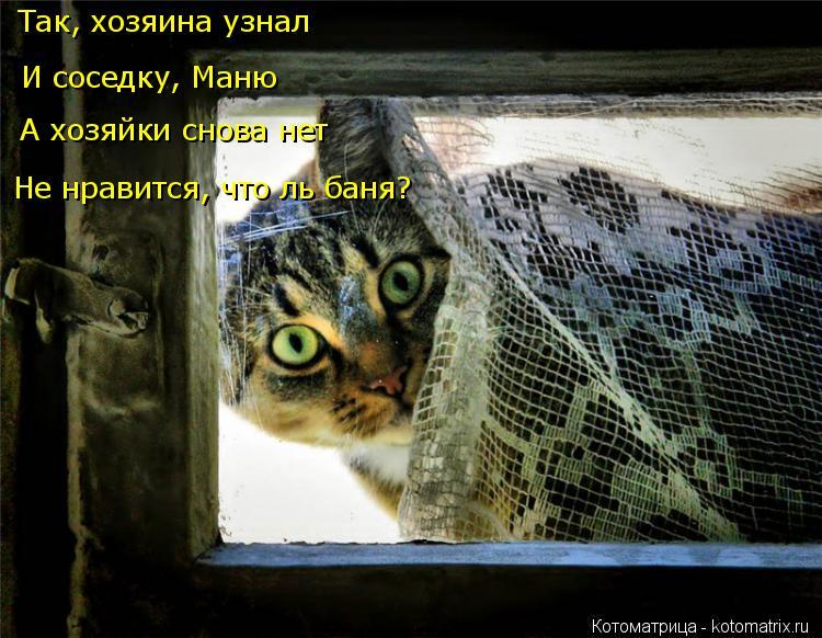 Котоматрица: Так, хозяина узнал И соседку, Маню А хозяйки снова нет Не нравится, что ль баня?