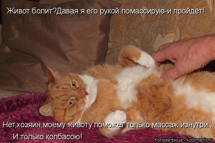Котоматрица: Живот болит?Давая я его рукой помассирую-и пройдёт! Нет,хозяин,моему животу поможет только массаж изнутри... И только колбасою!