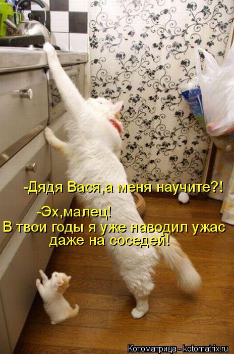 Котоматрица: даже на соседей! -Дядя Вася,а меня научите?! -Эх,малец! В твои годы я уже наводил ужас