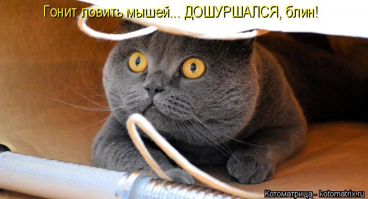 Котоматрица: Гонит ловить мышей... ДОШУРШАЛСЯ, блин!