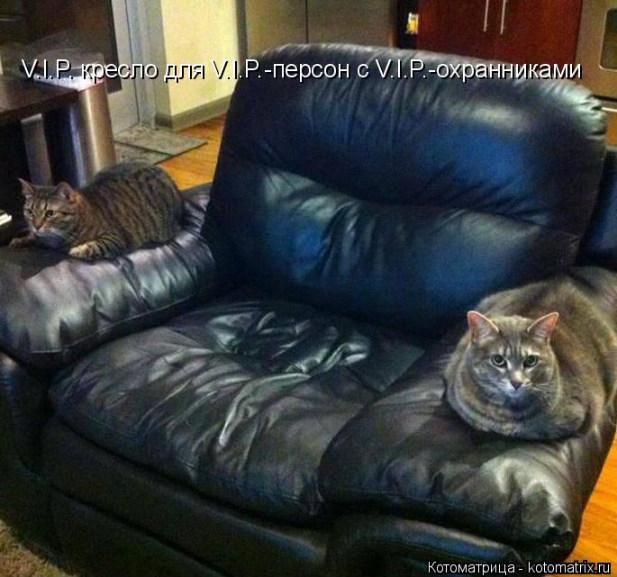 Котоматрица: V.I.P. кресло для V.I.P.-персон с V.I.P.-охранниками