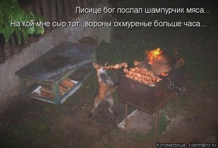 Котоматрица: Лисице бог послал шампурчик мяса... На кой мне сыр тот..,вороны охмуренье больше часа...