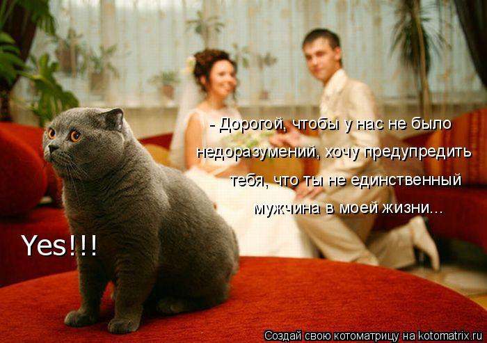 Котоматрица: - Дорогой, чтобы у нас не было недоразумений, хочу предупредить тебя, что ты не единственный  мужчина в моей жизни... Yes!!!