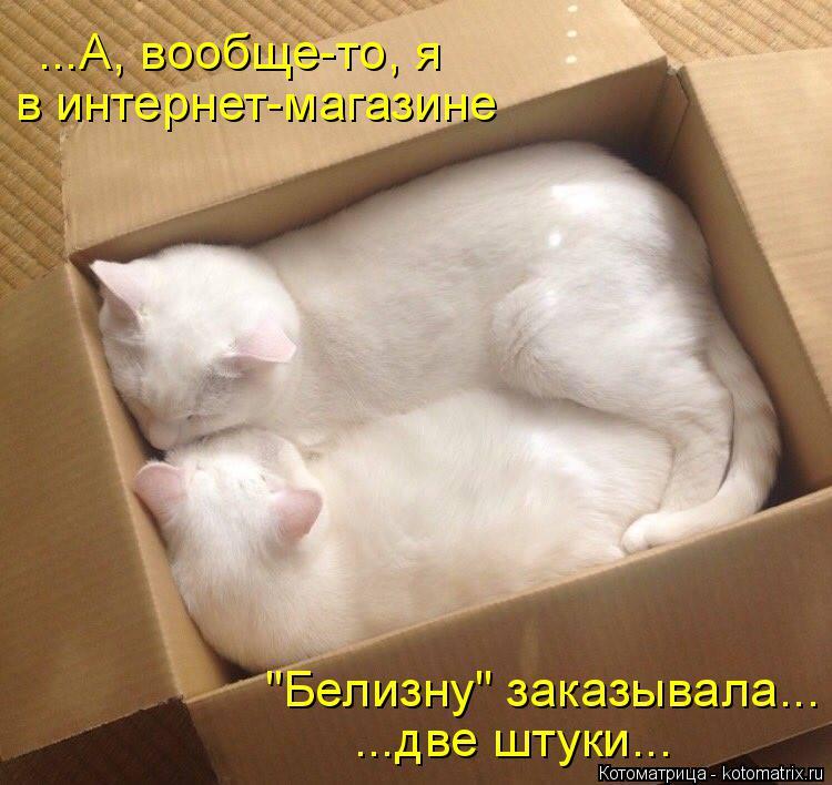 """Котоматрица: в интернет-магазине """"Белизну"""" заказывала... ...две штуки... ...А, вообще-то, я"""