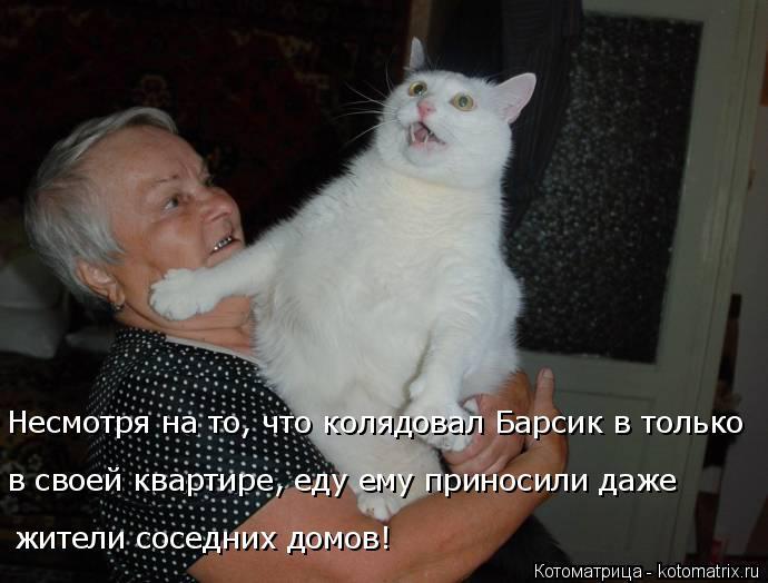 Котоматрица: Несмотря на то, что колядовал Барсик в только  в своей квартире, еду ему приносили даже  жители соседних домов!
