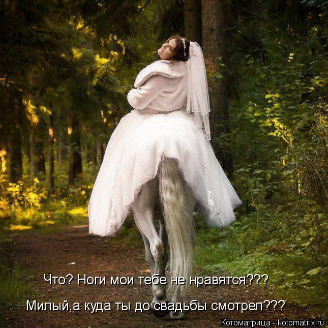 Котоматрица: Что? Ноги мои тебе не нравятся??? Милый,а куда ты до свадьбы смотрел???
