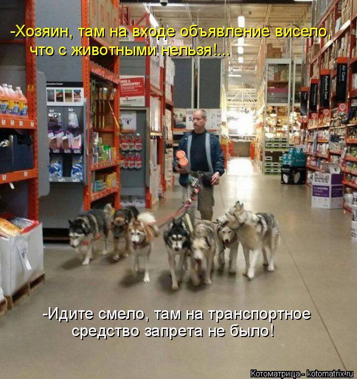 Котоматрица: -Хозяин, там на входе объявление висело, что с животными нельзя!... средство запрета не было! -Идите смело, там на транспортное