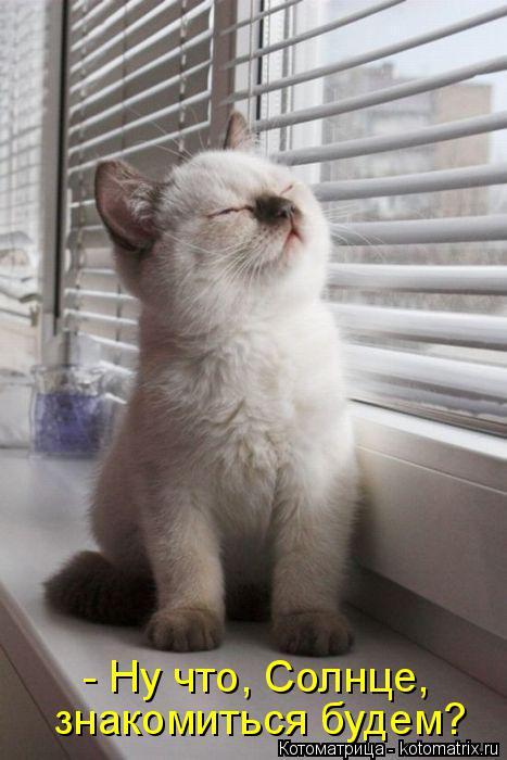Котоматрица: - Ну что, Солнце, знакомиться будем?